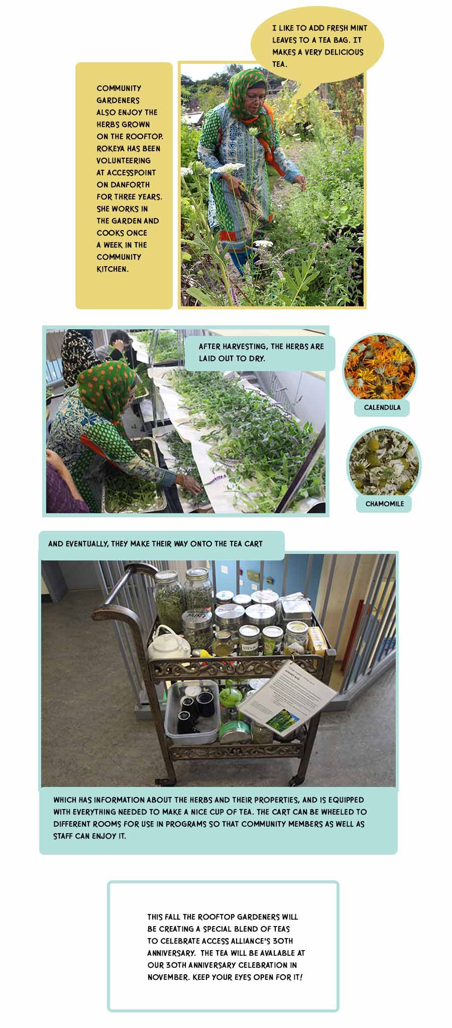 Photo story about harvesting and drying the herbs and using them on the Access Alliance staff tea cart.