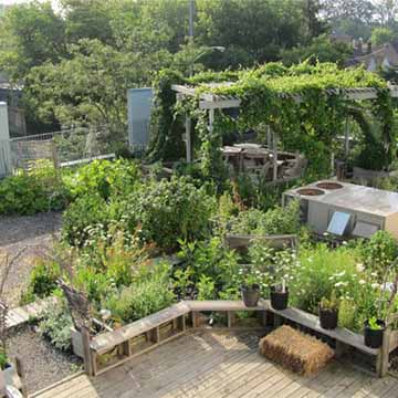 Link to Lessons from a green rooftop